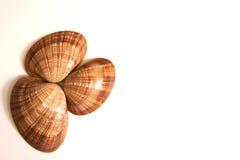 Três shell do molusco isolados contra um fundo branco Imagens de Stock Royalty Free