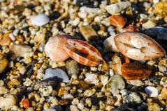 Três shell que encontram-se na areia Foto de Stock