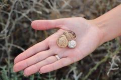 Três shell vazios na mão do ` s da menina Imagens de Stock
