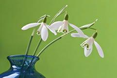 Três snowdrops em um vaso fotografia de stock royalty free