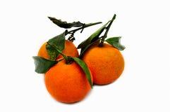 Três tangerinas Foto de Stock Royalty Free