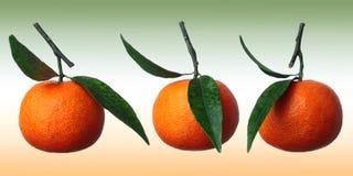 Três tangerinas Fotografia de Stock Royalty Free