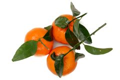 Três tangerinas isoladas no fundo branco Imagens de Stock