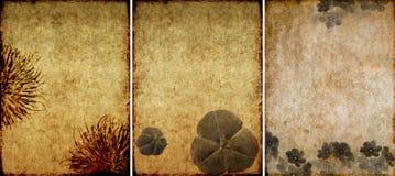 Três texturas encantadoras do fundo Fotografia de Stock Royalty Free
