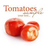 Três tomates fotografia de stock