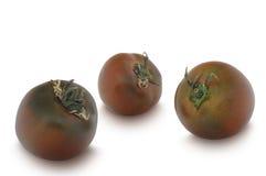 Três tomates de Kumato isolados no fundo branco Foto de Stock Royalty Free