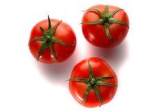 Três tomates em um fundo branco Imagem de Stock Royalty Free