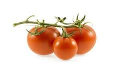 Três tomates no fundo branco Fotografia de Stock