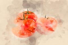 Três tomates vermelhos maduros Foto de Stock Royalty Free
