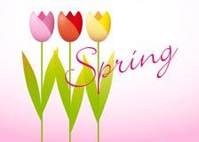 Três tulipas da mola ilustração royalty free