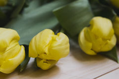 Três tulipas em um fundo de madeira claro Fotos de Stock Royalty Free