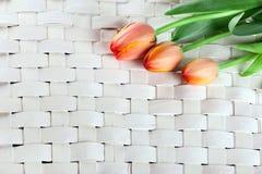 Três tulipas no fundo de vime de madeira Foto de Stock Royalty Free