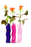 Três vasos coloridos com rosas fotografia de stock royalty free