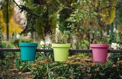 Três vasos de flores multi-coloridos na rua imagens de stock