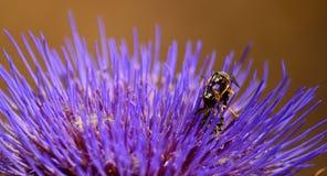 Três vespas na flor da alcachofra imagens de stock royalty free
