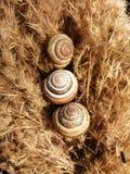 Trío de caracoles imagen de archivo libre de regalías