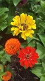 Trío de flores Foto de archivo libre de regalías