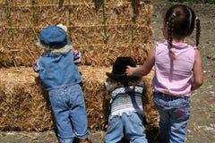 Trío de la granja Imagen de archivo libre de regalías