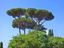 Trío de los árboles de paraguas en Italia imagen de archivo