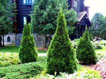 Trío de los cedros en el jardín Foto de archivo