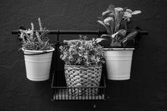 Trío de plantas en blanco y negro Foto de archivo libre de regalías