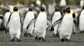 Trío del pingüino que recorre junto Foto de archivo libre de regalías