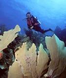 Trío del ventilador de mar Imagen de archivo libre de regalías