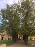 Trójcy szkoły wyższej wejście obrazy royalty free