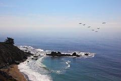 trójgraniaści lotów pelikany Fotografia Stock