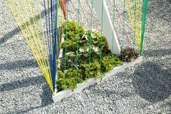 Trójgraniasty flowerbed z arkanami dla rośliien blisko żwiru śladu, minimalizmu i nowożytnego projekta, zdjęcie royalty free
