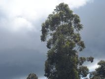 Trópico verde fotos de archivo