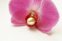 Trône de perle Photos stock