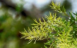 Tröpfchen auf Blättern Stockfoto