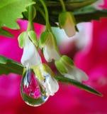 Tröpfchen auf Blumen Stockfotos