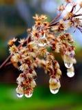 Tröpfchen auf Blumen Lizenzfreies Stockfoto
