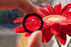 Tröpfchen auf den Blumenblättern Lizenzfreies Stockfoto
