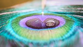 Tröpfchen auf einem Peafowl Stockbild
