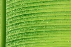 Tröpfchen auf grünem Blatt Lizenzfreie Stockfotos
