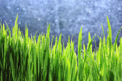Tröpfchen auf grünem Blatt Stockfotos