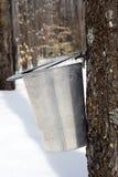 Tröpfchen des Ahornholzsafts betriebsbereit, in einen Eimer zu fallen Lizenzfreies Stockbild