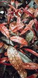 Tröpfchen des Regenwassers auf Blättern lizenzfreie stockfotografie