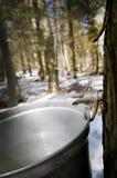 Tröpfchen des Safts fließend vom Ahornholzbaum lizenzfreie stockfotografie