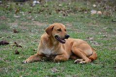 Trött hundsammanträde Royaltyfri Bild