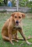 Trött hundsammanträde Royaltyfria Foton