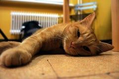 Trött orange katt som ligger på golvet arkivfoto