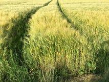 Trötta spår från en stor traktor i ett fält Arkivfoto