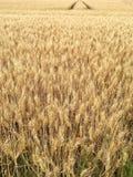 Trötta spår från en stor traktor i ett fält Fotografering för Bildbyråer