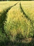 Trötta spår från en stor traktor i ett fält Royaltyfri Bild
