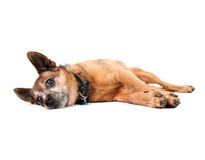 tröttad hund arkivfoton