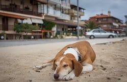 tröttad hund fotografering för bildbyråer